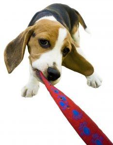 Que Hacer Si tu Perro No te Obedece y Se Porta Mal?