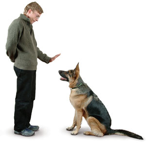 Training Puppies on Secretos Del Adiestramiento Canino   Como Educar Y Adiestrar A Un
